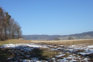 Field_nearby_Dietikon_partially_covered_with_snow