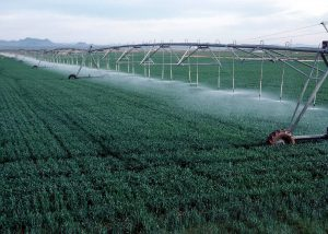 watering_ontozes